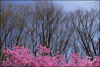 里山の春 - 薫の時の記憶
