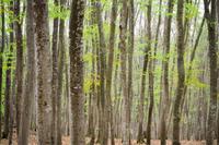 芽吹き - 松之山の四季2
