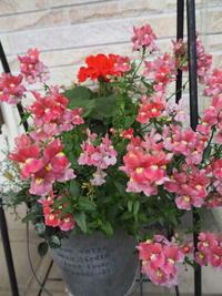 4月の庭北側玄関の花no.2 - グリママの花日記