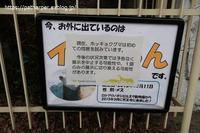 2020年2月天王寺動物園その1Shilkaとゴーゴ初同居 - ハープの徒然草