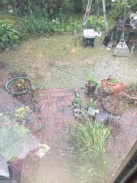 豪雨に雷から一転快晴後、また雨 - わたしの好きな物