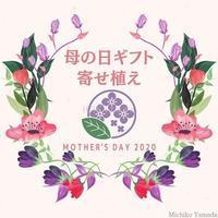 母の日ギフト、受付開始しました - 花の庭づくり庭ぐらしガーデニングキララ