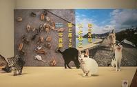 猫めない - ふらりぶらりの旅日記