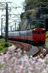 お花畑?とキハ2020年4月14日 - 鉄道日和