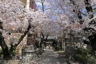 ご近所の桜 - ぴんぼけふぉとぶろぐ2