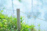 水辺に咲く - jumhina biyori*