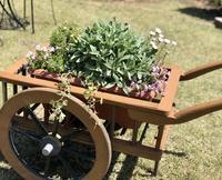エキサイティングな庭、試練の庭(T . T) - 薪割りマコのバラの庭