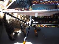 【私のベランピング】  チェアと、BGMと、ネコに、ソラ - SAMのLIFEキャンプブログ Doors , In & Out !