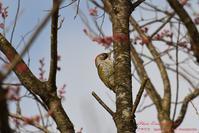 赤谷の森で・・・調査の合間に - フォト エチュード  Photo-Etudes