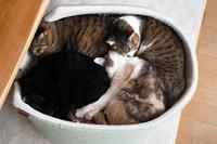 愛用した猫ベッドに感謝でお別れ - きょうだい猫と仲良し暮らし