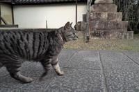 梅宮大社のネコ - Taro's Photo