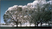 公園の風景 - コバチャンのBLOG