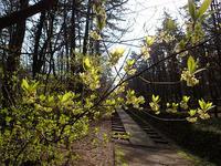 4月15日の三瓶山①*中国自然歩道①* - 清治の花便り