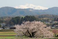 桜と風景 - はっぴいでいず