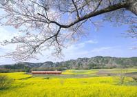 石神の菜の花畑 - Patrappi annex
