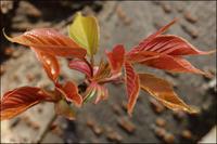 芽吹き - 薫の時の記憶