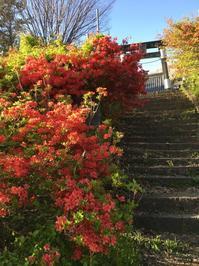 十二山 (2020/4/19撮影) - toshiさんのお気楽ブログ