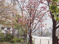 牡丹桜♡ - 静かに過ごす部屋