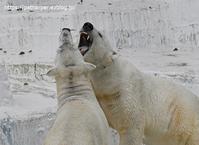 2020年2月天王寺動物園その2 - ハープの徒然草
