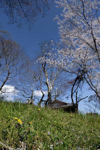 2020桜巡り@大原野神社千眼桜 - デジタルな鍛冶屋の写真歩記