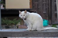 梅宮大社のネコ2つめ - Taro's Photo