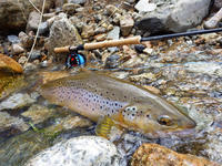 TEAL Video ChannelをWEBに更新しました。 - Fly Fishing Total Support.TEAL