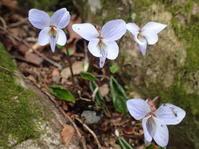 4月15日の三瓶山②*別れ雪* - 清治の花便り