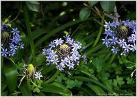 庭の花-6 - 野鳥の素顔 <野鳥と日々の出来事>