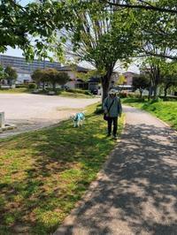 慢性腎臓病№1 - 秋田犬「大和と飛鳥丸」の日々Ⅱ