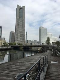 早朝散歩大岡川夢ロード - ワクワク♪ハマっ子野菜作り♪