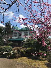 梅が綺麗な盛美園 - リモートワークしながら青森近郊の安金楽な観光&田舎暮らし