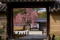 2020桜咲く京都 高台寺の春 - 花景色-K.W.C. PhotoBlog