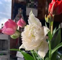 4月4週目の今 - ♪Allegro moderato♪~穏やかに早く~