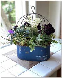 シックな寄せ植えとシックなリグラリア - 小さな庭 2