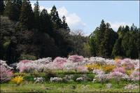 花の宴 - 薫の時の記憶