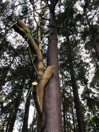 お散歩中に見つけた木 - しのやブログ