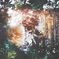 Sylvaine Unreqvited Split EP - Hepatic Disorder