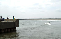 釣り人とサーファーで賑わう九十九里・片貝 - 東金、折々の風景