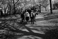 櫻2020#53絶景の櫻があるとすれば#19 - Yoshi-A の写真の楽しみ
