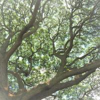 宇宙とエネルギーのおはなし会【オンラインサロン】 - aloha healing Makanoe
