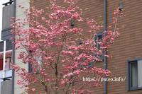 足立区.街路樹の花の咲く木。 - 一場の写真 / 足立区リフォーム館・頑張る会社ブログ