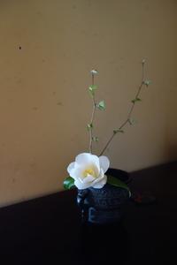 癒されること - g's style day by day ー京都嵐山から、季節を楽しむ日々をお届けしますー