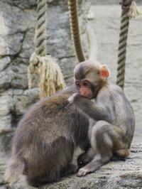 かわいい子たち2018.10[よこはまズーラシア] - a diary of primates