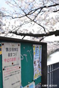 川沿いに 桜700本 『横浜・大岡川』⑥ - 写愛館