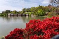 「霧島の赤い季節だけど・・・」 - ほぼ京都人の密やかな眺め Excite Blog版