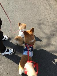 子犬飼育日記 - なのはペットクリニック 2021年3月24日新規オープン!