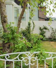 連載記事「実録!バラがメインの庭づくり第4話」がGarden Storyさんにてアップ頂きました。 - バラとハーブのある暮らし Salon de Roses