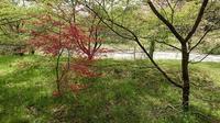 赤い芽吹き - 金沢犀川温泉 川端の湯宿「滝亭」BLOG