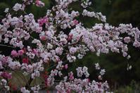 もも春の花 - ひとときのやすらぎをあなたに