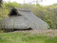 『紫雲英(ゲンゲ)と山吹(ヤマブキ)2種と山芍薬(ヤマシャクヤク)』 - 自然風の自然風だより